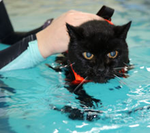 Cat in the hydrotherapy pool